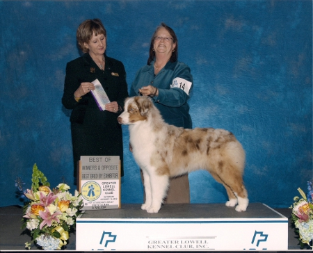 first AKC web